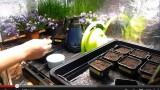 Tutoriel semer du basilic en pot